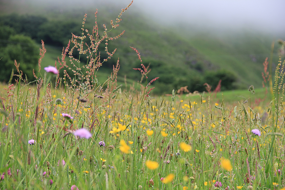 Wilde bloemen  (Merit de Jong)