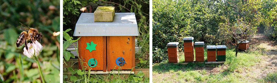 Bienen der Stiftung ABR  (Ireen Roskam)